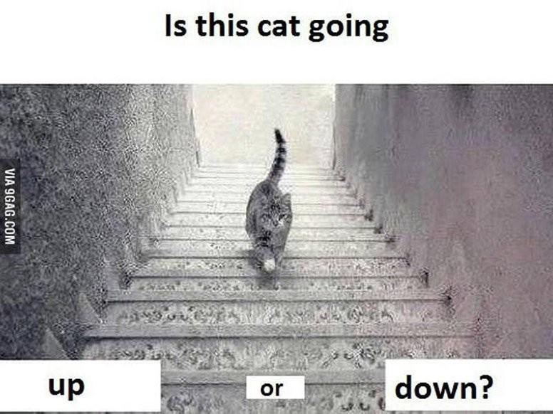 Czy ten kot idzie w górę, czy w dół?