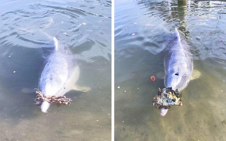 Australijskie delfiny przynosząсe prezenty z głębin