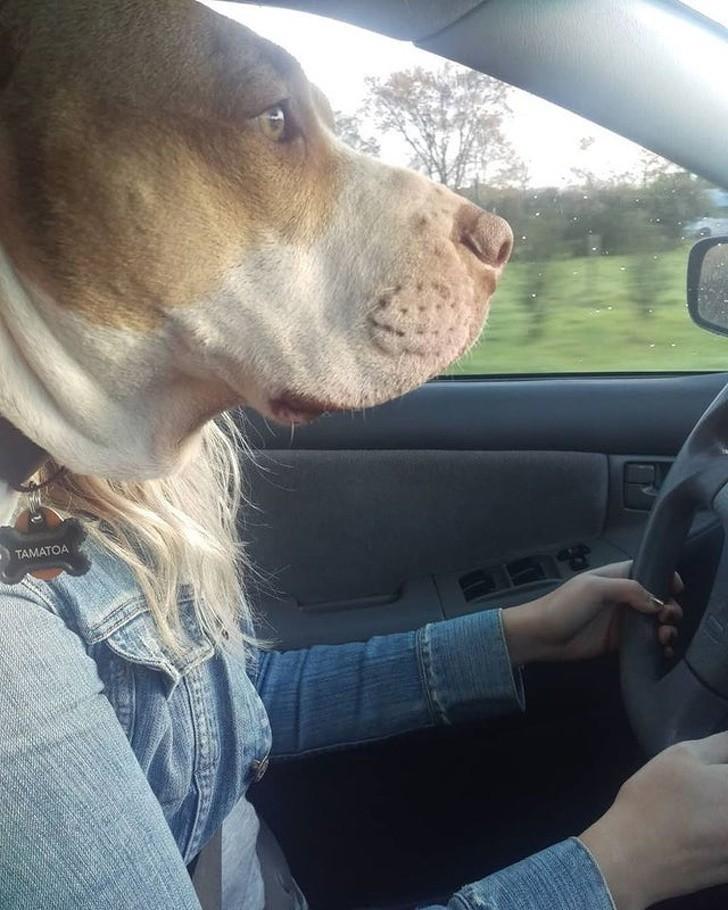 3. Twój osobisty kierowca