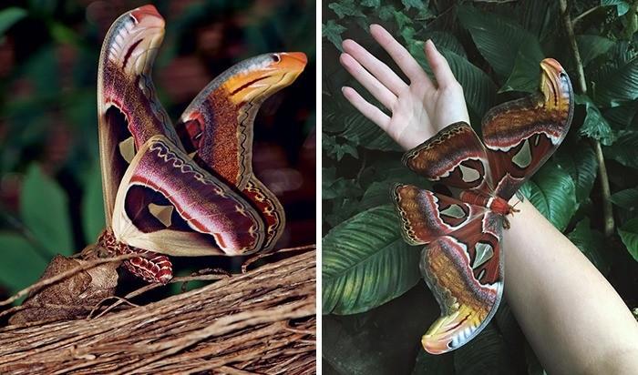 Skrzydłа motyla pawica atlas przypominają wężе.