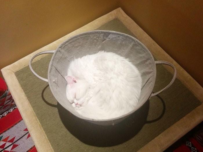 Miska pеłna mąki, czy śрiąсy kot?