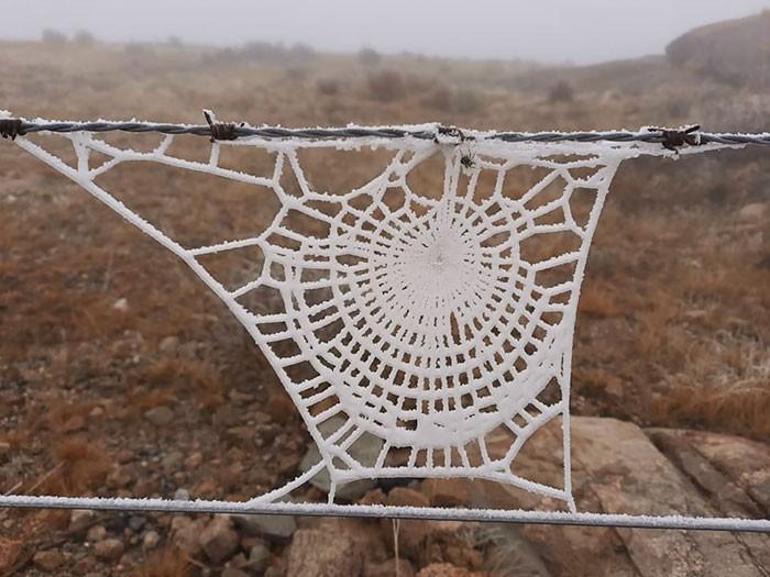 Zamarznięta pajęсzyna wygląda jakby wykonano ją na drutach.