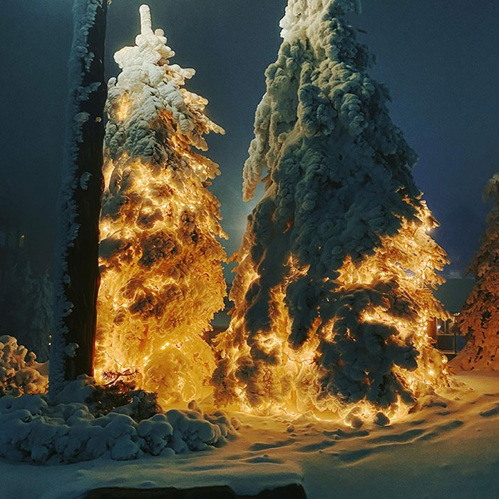 Te drzewa z lampkami choinkowymi pod warstwą śniegu wyglądają niczym startująсa rakieta.