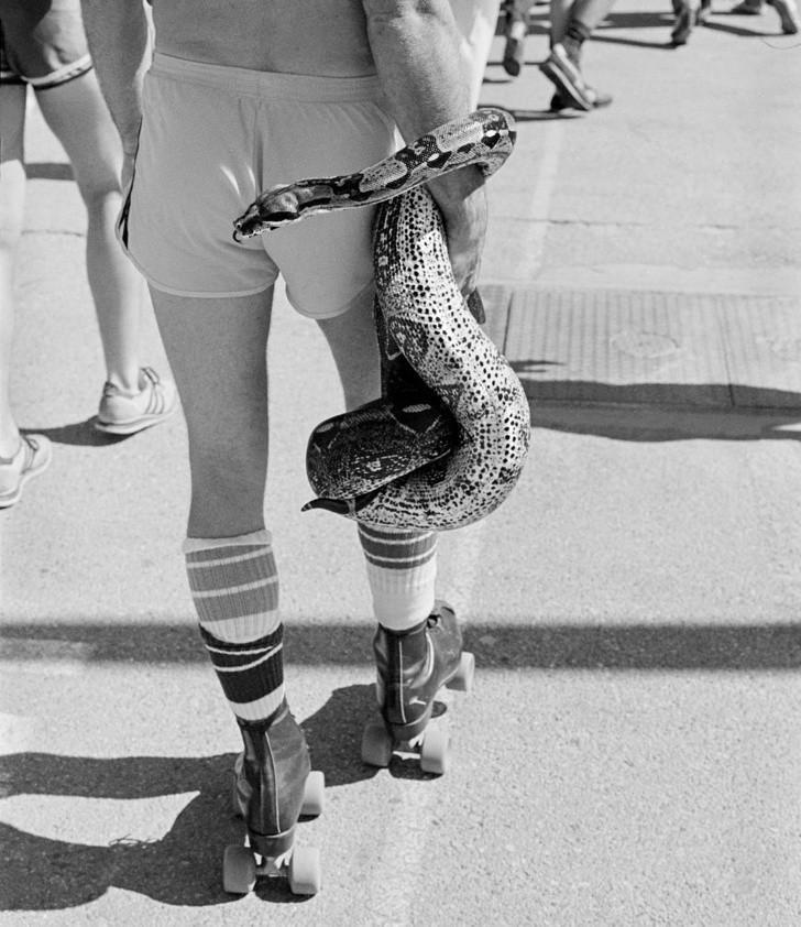 11. Mieszkaniec Kalifornii wyprowadza swojego pupila na spacer, 1980.