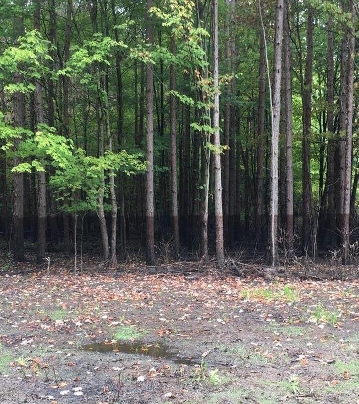 12. Linia wody pozostała na drzewach po ustąpieniu powodzi