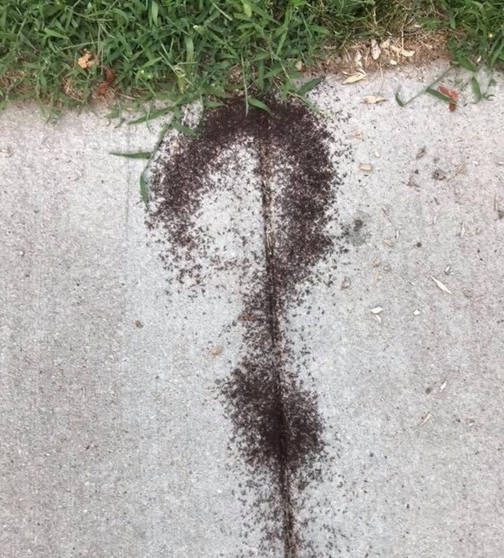 13. Te mrówki mają parę pytań