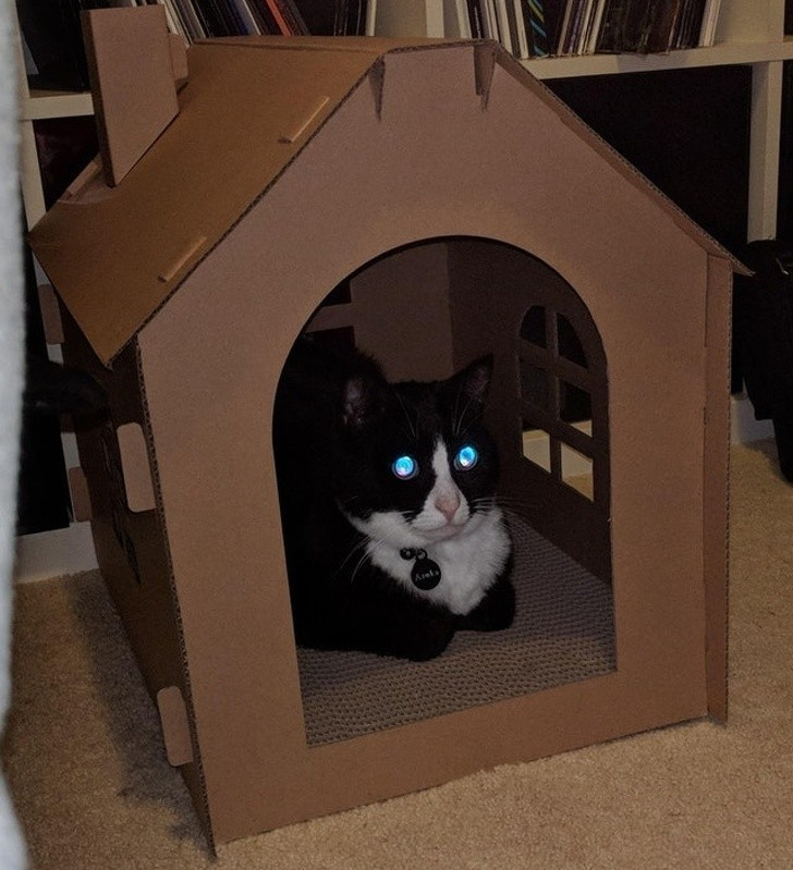 """14. """"Oczy mojego kota odbijają niebieskie światło, zamiast standardowego zielonego"""""""
