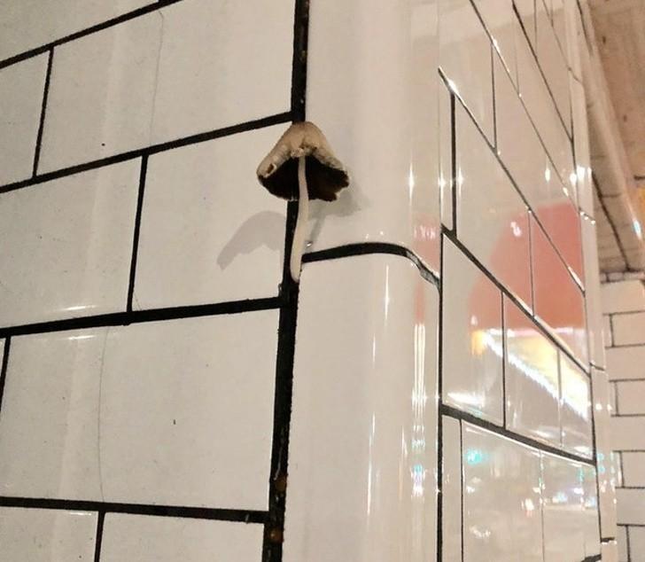 17. Ten grzyb wyrastający ze szczeliny między płytkami budynku w Brooklynie