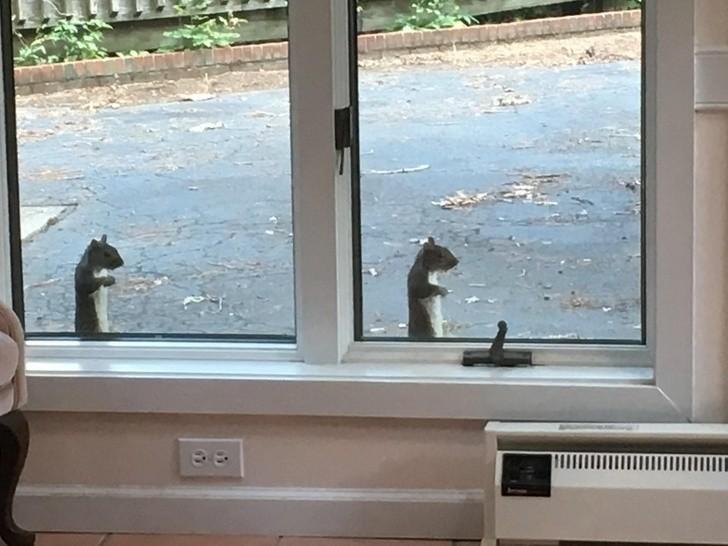 """18. """"Dwie wiewiórki za moim oknem, które przybrały identyczną pozę"""""""