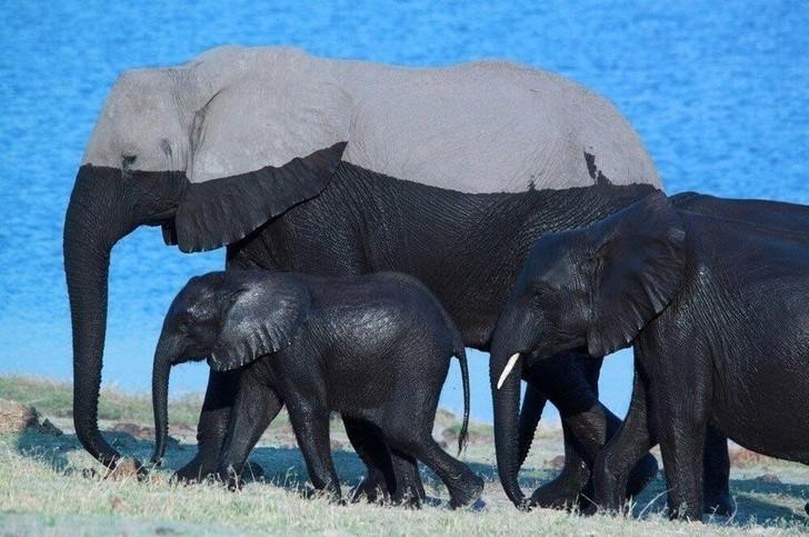 7. Słonie po wyjściu z wody