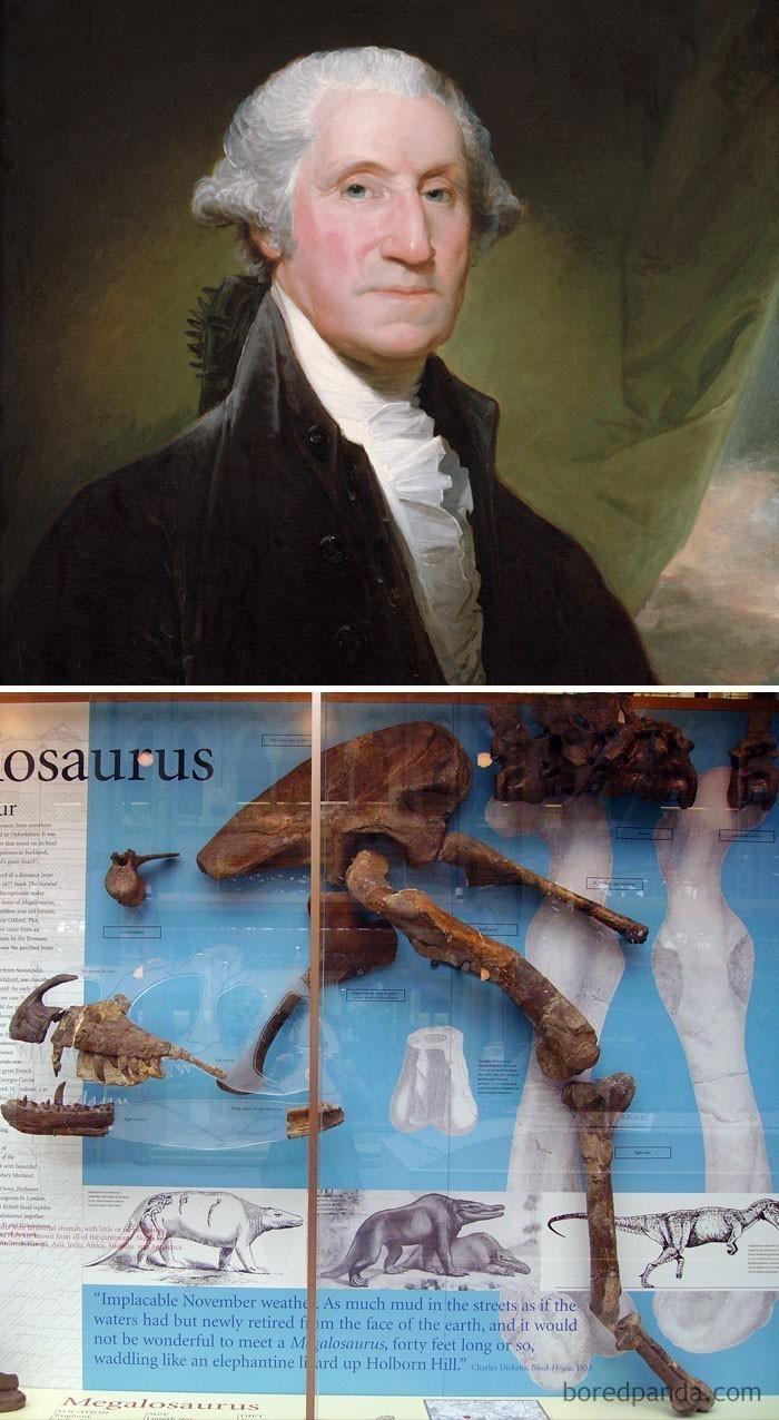 5. George Washington zmarł w 1799 roku. Pierwsze pozostałości dinozaurów wykopane zostały w 1824. George Washington nie miał pojęcia o istnieniu dinozaurów.
