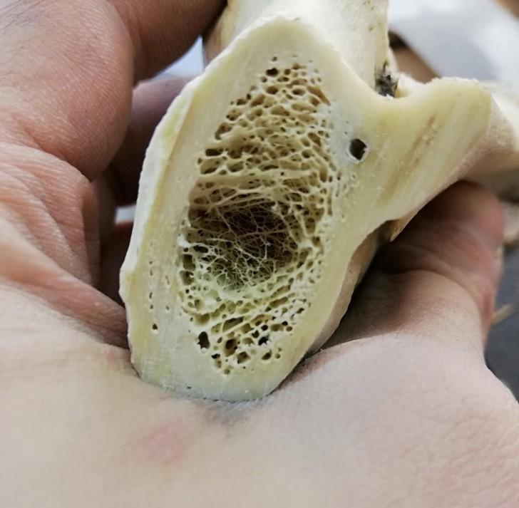 4. Wygląd wnętrza kości może cię zaskoczyć