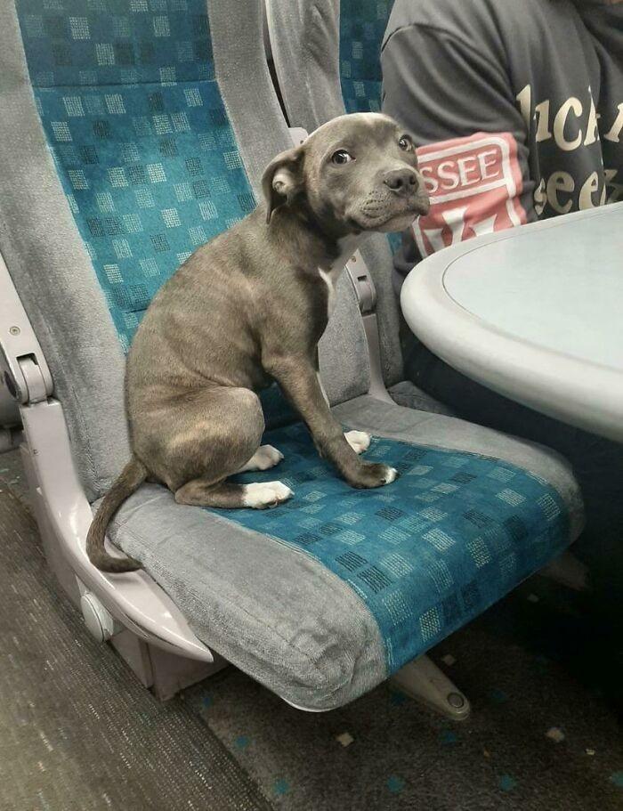 """""""Oto Athena. To jej pierwsza podróż pociągiem i nieco się boi, ale to dzielna dziewczynka."""""""