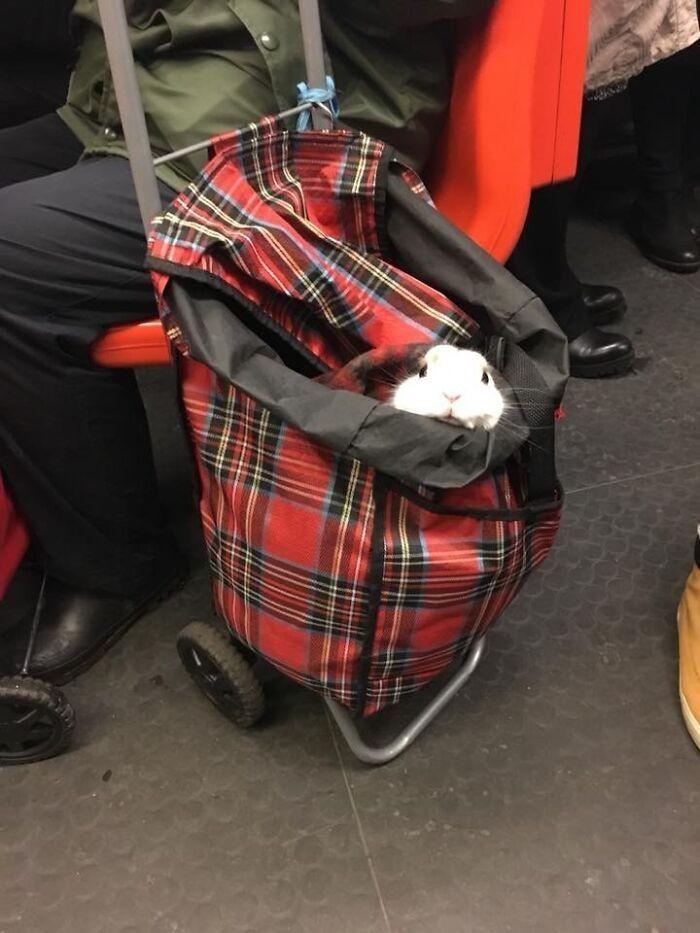 """""""Znajoma zobaczyła tego pana w metrze."""""""