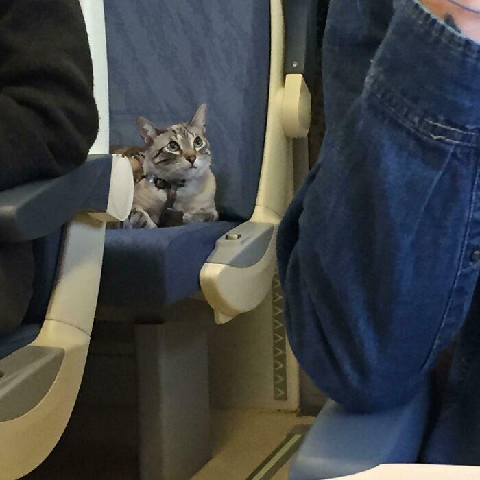"""Ta kotka miała swoje własne siedzenie podczas trzygodzinnej podróży pociągiem. Przez cały czas była bardzo grzeczna."""""""