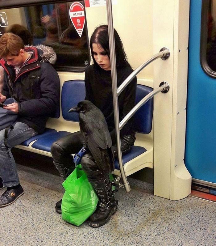 Dziewczyna i jej kruk w metrze