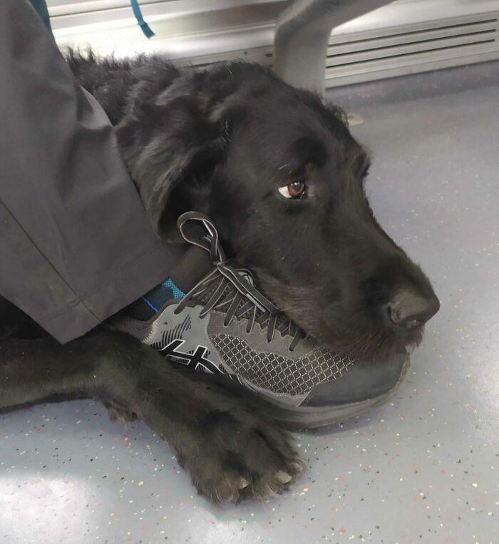 """""""To Axel, pies przewodnik mojego niewidomego taty. Właśnie wracają z tygodniowej wycieczki."""""""