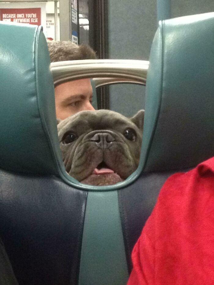 """""""Jestem w pociągu i zobaczyłem tę przyjazną mordkę."""""""