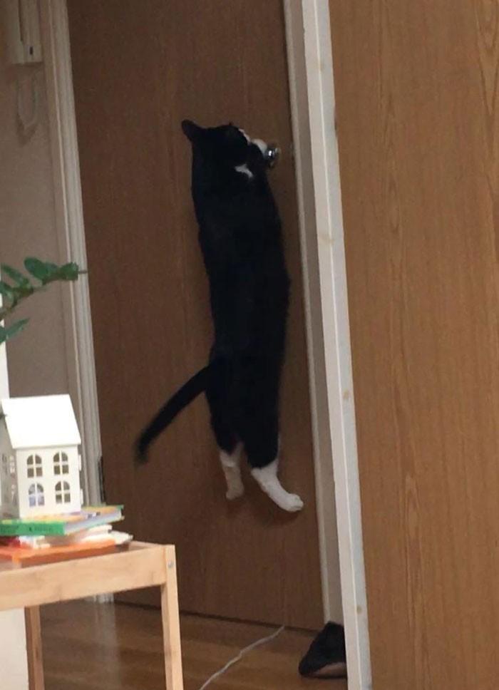 """Chłopak: 'Masz paranoję, kot wcale nie kocha mnie mocniej."""" Gdy chłopak wyszedł z pokoju:"""