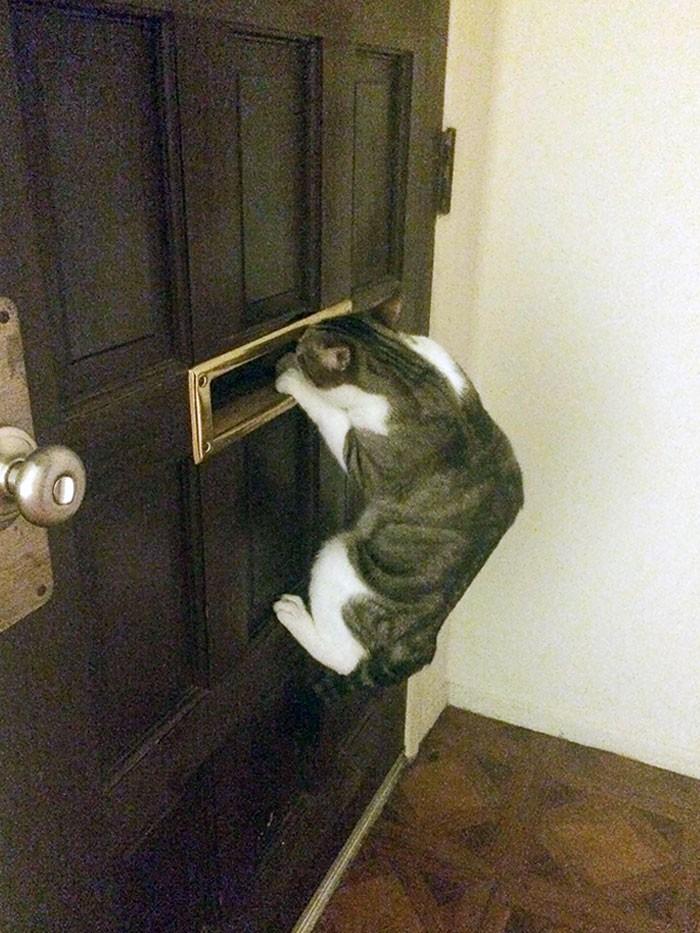 """""""Mój kot, czekający na powrót mojego chłopaka"""""""