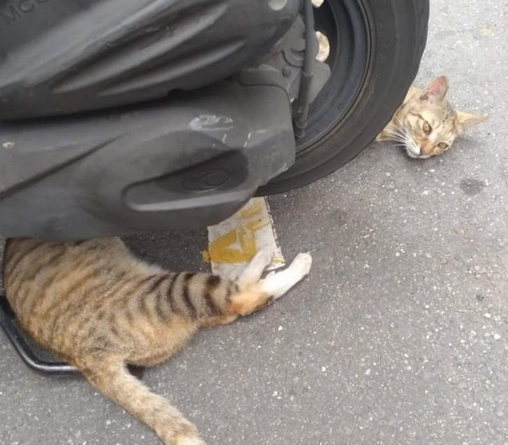 11. Kolejny długaśny kot