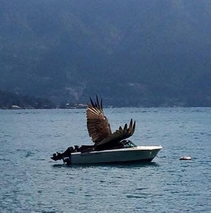 12. Orzeł i jego łódka