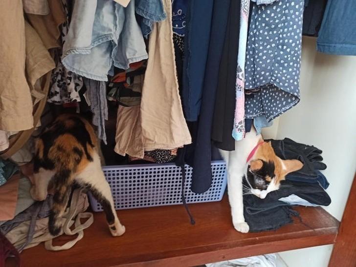 6. Cóż za długi kot