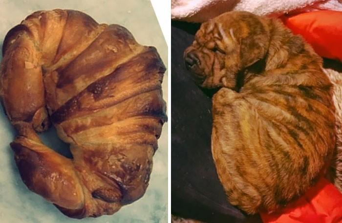 """""""Mój mocno podpieczony croissant"""""""