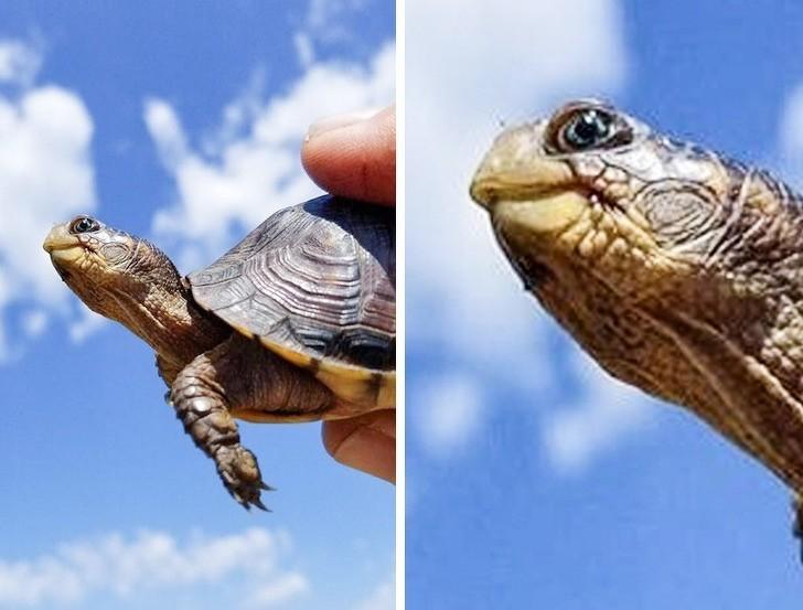 12. Uśmiechnięty żółw z niebieskimi oczami