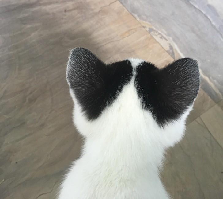 18. Kotek stworzony do miłości