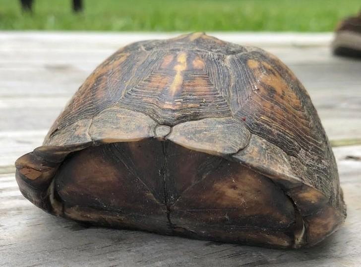 5. Żółw z kokardą