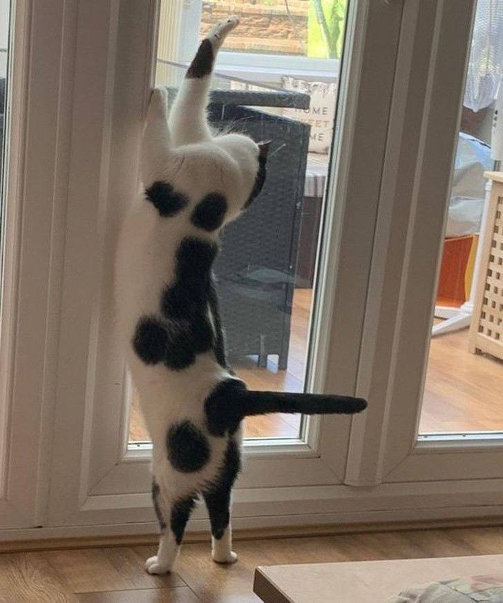 6. Kot z niezwykle prostym ogonem