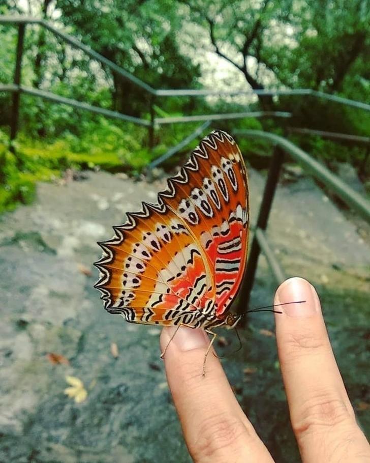 """9. Ten motyl ma na skrzydłach maskę z """"Krzyku"""""""