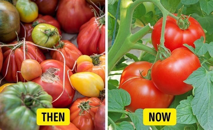 """3. Pomidory były niegdyś znane jako """"trujące jabłka""""."""