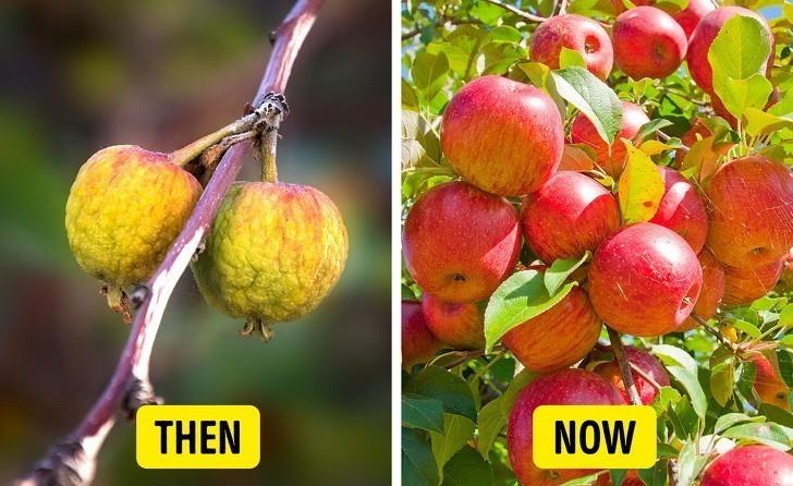 7. Jabłka były malutkie.