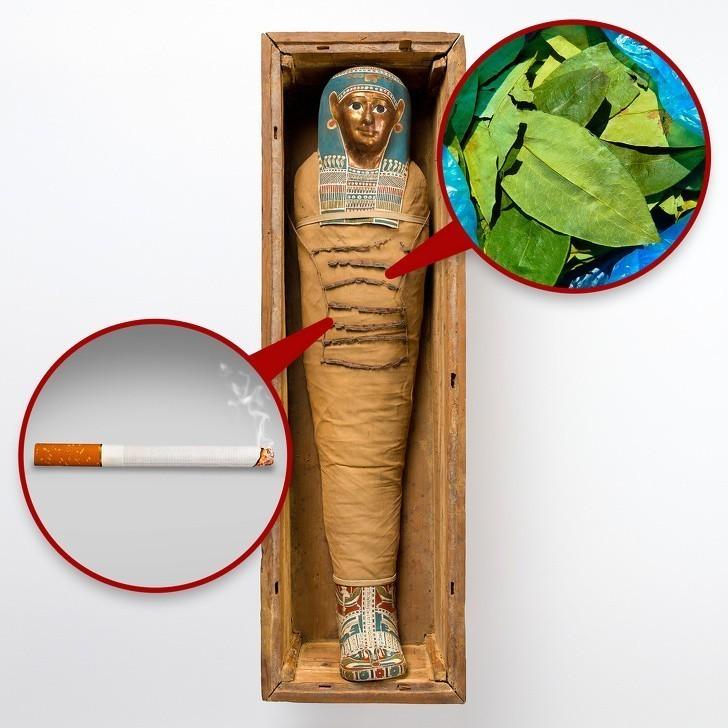 4. Kokaina i tytoń w egipskich mumiach, sugerujące, że Egipcjanie kontaktowali się z Ameryką