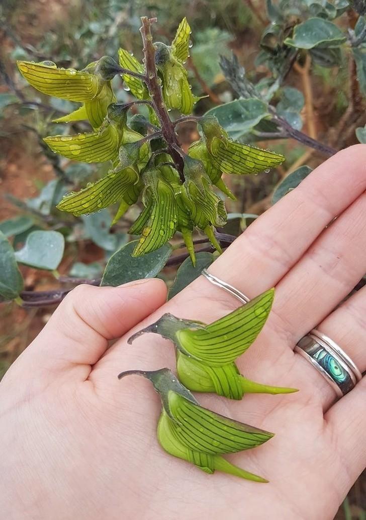 11. Te kwiaty wyglądają niczym malutkie kolibry