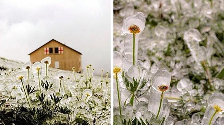 8. Pole po opadach śniegu w środku lata