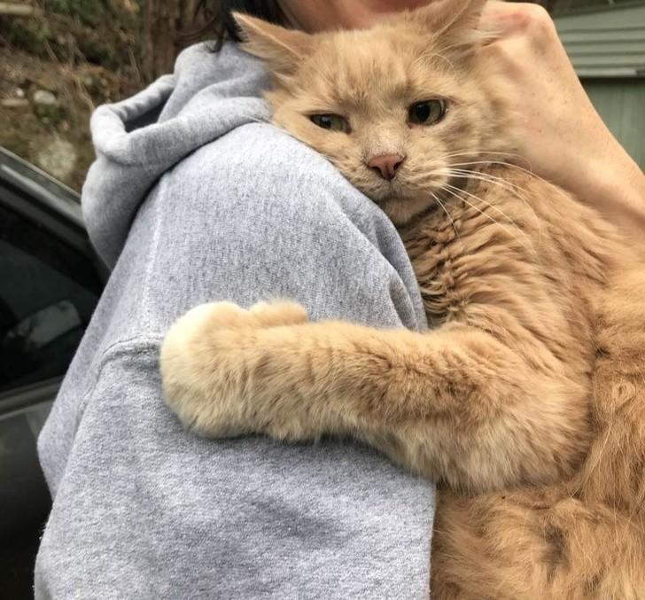 15. Ta kotka odnalazła swoją właścicielkę po 5 godzinach
