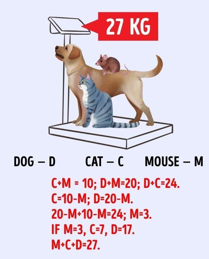 3. Pies - D Kot - C Mysz - M