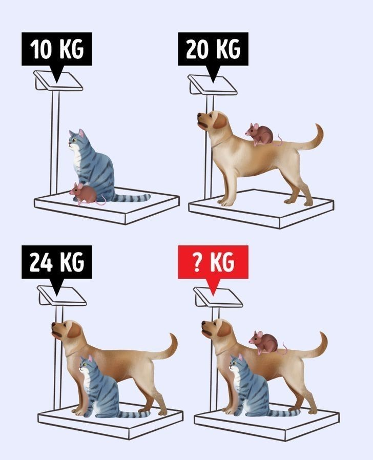 3. Ile ważą wszystkie zwierzęta razem?