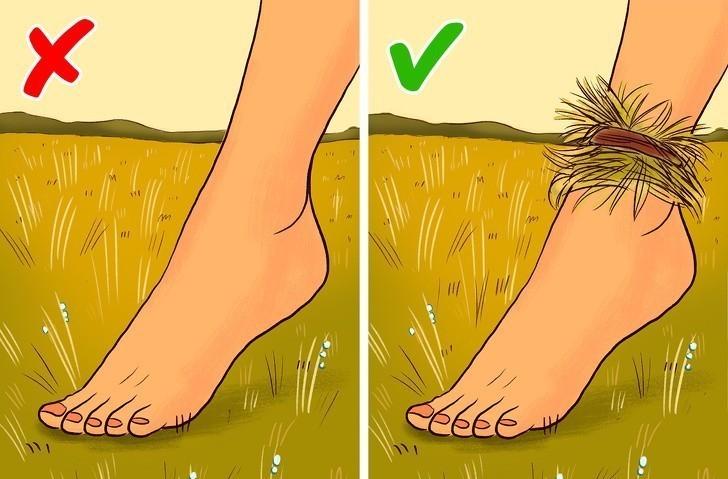 3. Zbierz poranną rosę dzięki opaskom z trawy.
