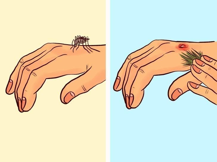 5. Potrzyj dłonie igłami sosny by odstraszyć komary.