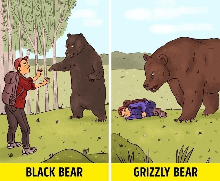 6. Udawaj martwego w przypadku ataku dużego zwierzęcia, takiego jak niedźwiedź grizzly.
