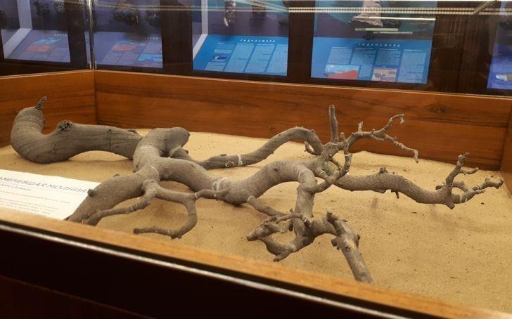 2. To nie drzewo, lecz fulguryt – efekt stopienia piasku kwarcowego po uderzeniu pioruna.