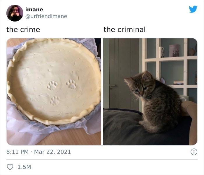 Zbrodnia - przestępca