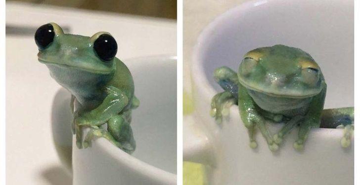 13. Nikt nie oprze się tej żabce