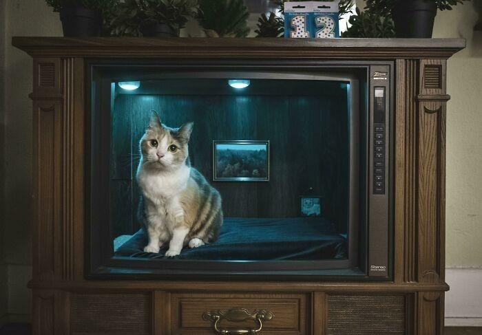 """""""Stary telewizor przerobiony na posłanie dla kota"""""""