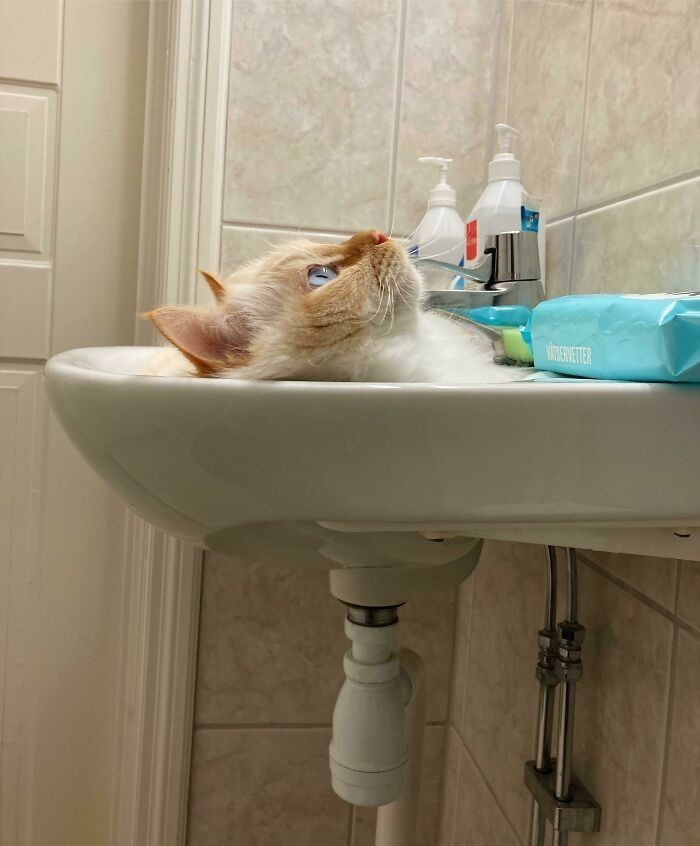 """""""Mój kot wygląda jakby wciągnął go zlew."""""""