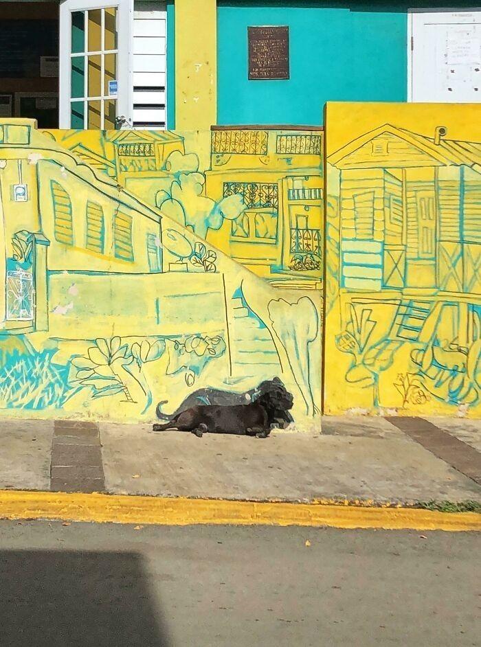 """""""Mural w Portoryko. Wraz z rysunkiem psa, który często tam leży"""""""